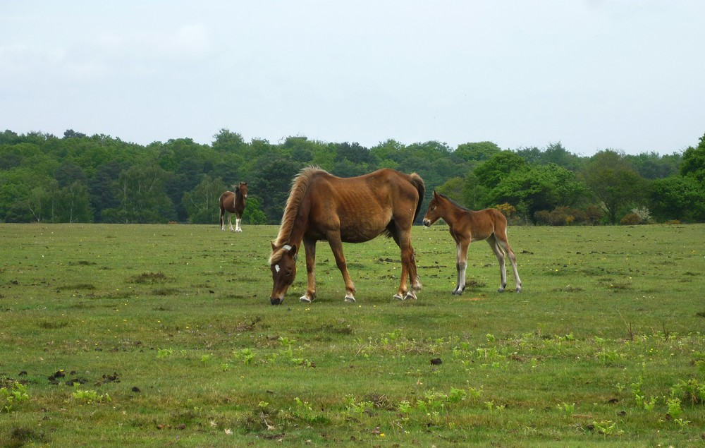 Whites guide to Downton and the edge of the New Forest Wednesday 19th May 2021