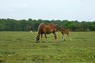 Whites guide to Downton and the edge of the New Forest
